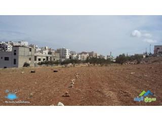 ارض للبيع في شفا بدران/ مرج الاجرب - قرب مدارس زهرة البنفسج
