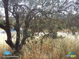 ارض للبيع في مرج الحمام/ ام عبهرة - قرب جمعية الياسمين لأطفال الداون
